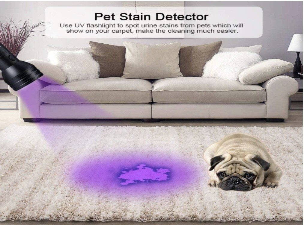 a blacklight pet stain detector